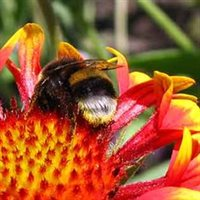 Bumble Bees, the Bible in India, Russian poetics and comparing things