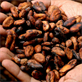 Can drinking cocoa make you smarter?