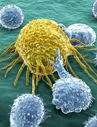 cancer-immunology