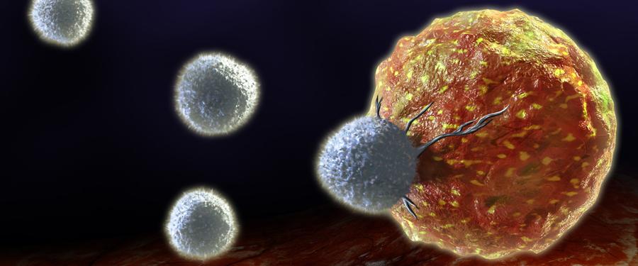 Cancer Immunology University Of Birmingham