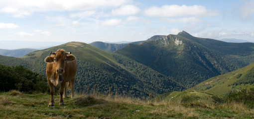 Photograph of a cow in a mountain range