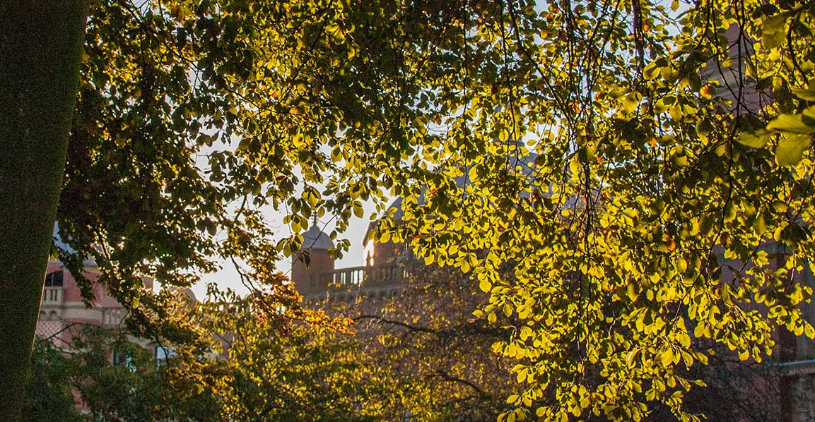 Picture of the Aston Webb through the autumn trees