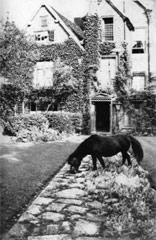 Photograph of a pony on a path