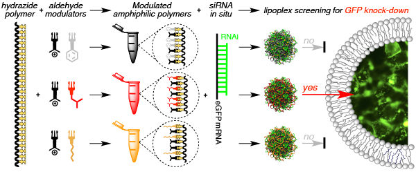 graphic illustrating In Situ Functionalized Polymers for siRNA Delivery