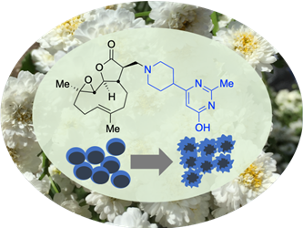 A compound with anti-cancer properties from a feverfew plant