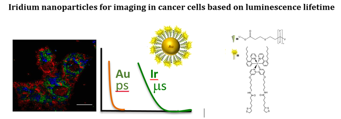 Iridium nanoparticles for imaging in cancer cells based on luminescence lifetime