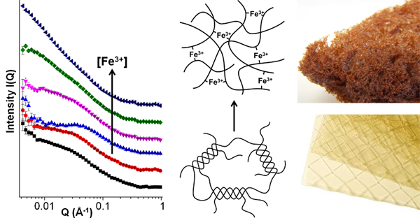 Mechanistic insights into porous carbons from gelatin