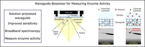 Biosensor measuring enzyme activity