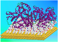 Gold-surfaces-for-protein-detection_ZoePrikramenou