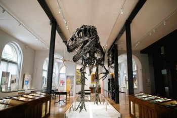 Lapworth Museum of Geology - allosaurus