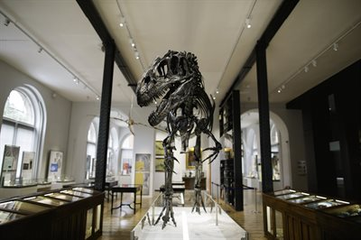 View of the Allosaurus