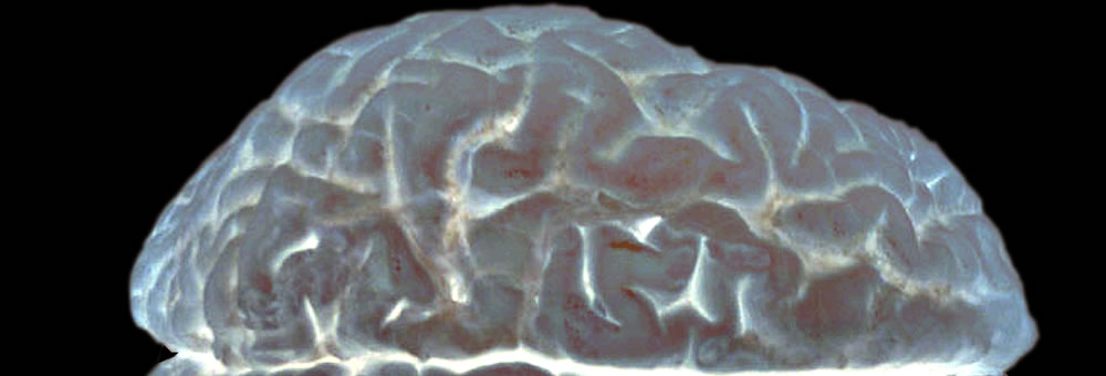 Decorative image of the human brain