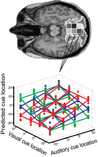 audiovisual brain imaging