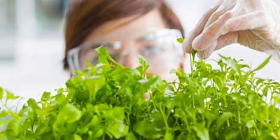 Plant Science and Food Security