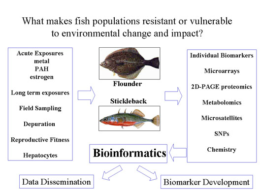 Environmental impact on fish populations