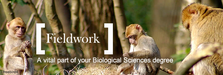 Studying barbary macaques on field course