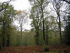 Chaddersley Woods
