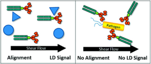 Biomolecular detection coupling flow and linear dichroism
