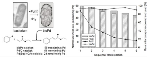 Palladium nanoparticles supported on bacterial biomass capable of catalysing the Heck reaction