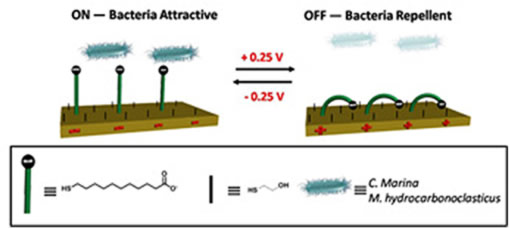 Design and study of an electrical switchable bacterial adhesion surface