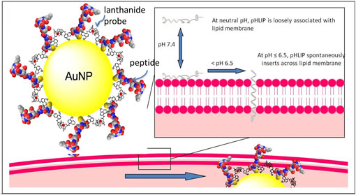 Luminescent europium and pH low inserting peptide coated nanoparticles for pH controlled delivery into platelets