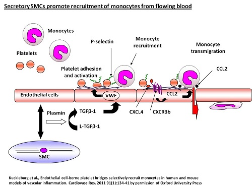 Leukocyte Trafficking Group - platelet monocyte interactions