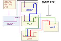 Epigenetics & Gene Regulation