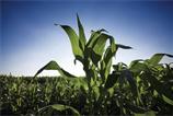 Potential biofuel sources include crops