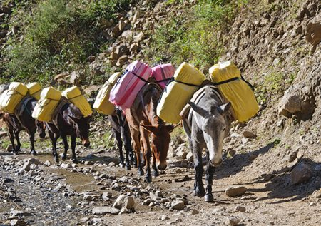 Donkeys-transporting-vaccines-form-part-of-the-cold-chain-Cropped-450x317