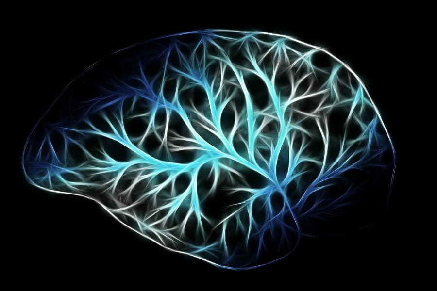 Brains Of Young People With Severe >> Brain Wiring Differences Identified In Children With Conduct Disorder