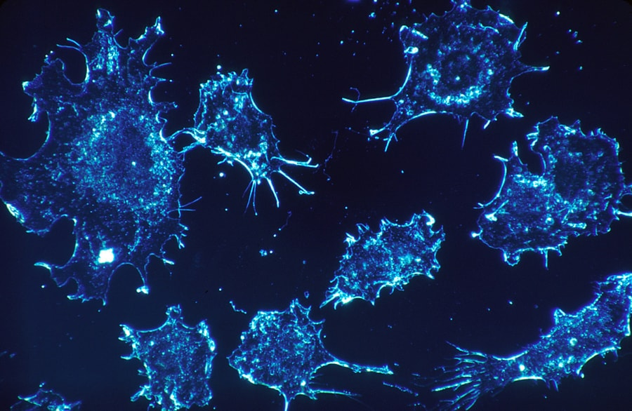 Research finds cancer hijacks natural cell process to survive