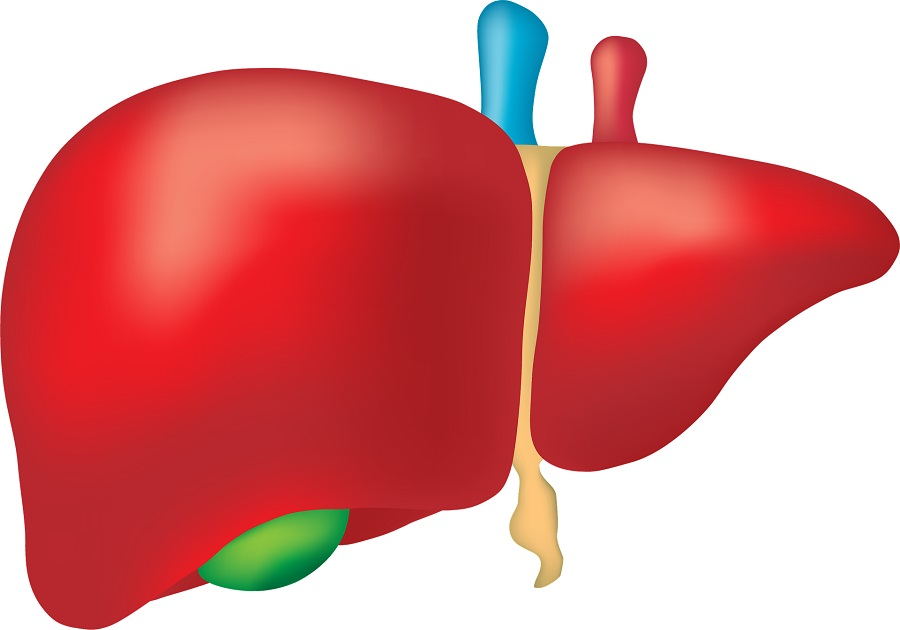 ground breaking study tests whether rejected livers can be made