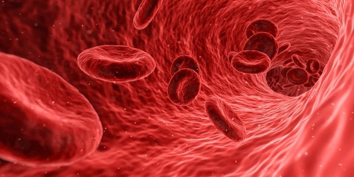 red-blood-cells-900px