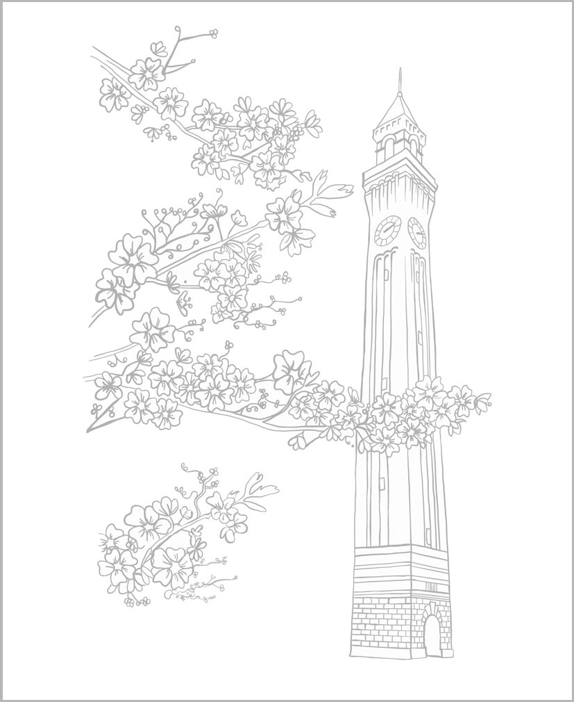 Line drawing of the University of Birmingham's 'Old Joe' clock tower with blossom in the foreground.