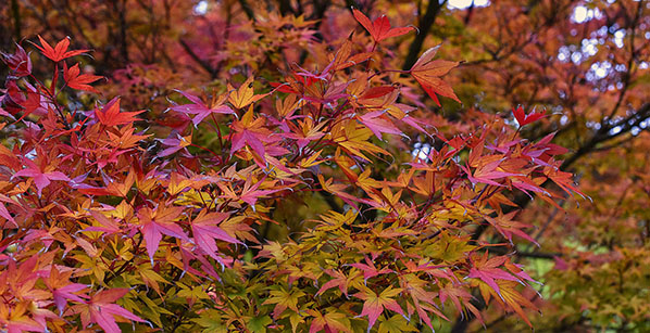 An ACER tree