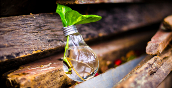 Image of a bulb with plant growing, to illustrate innovation.