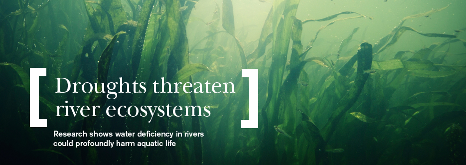 Underwater in a river - drought threatens rivers