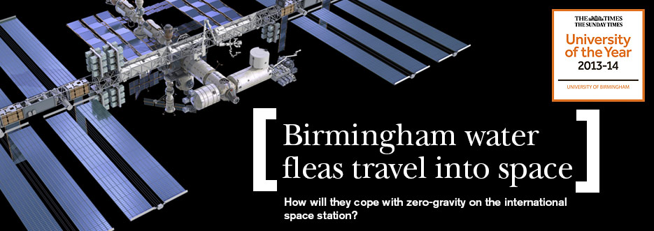 'Brummie' water fleas prepared for their trip to space