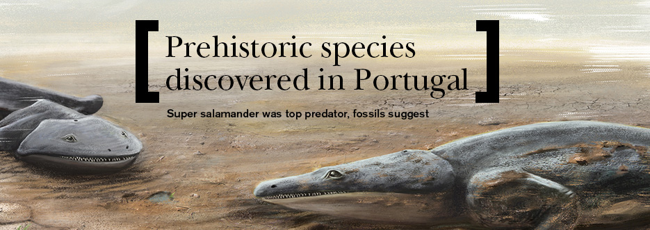Prehistoric super salamander was top predator, fossils suggest